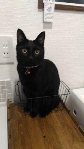 かご入り黒猫