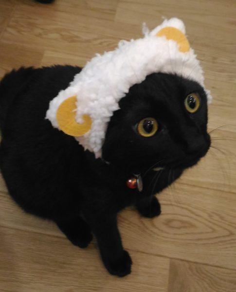 クロネコの愛猫