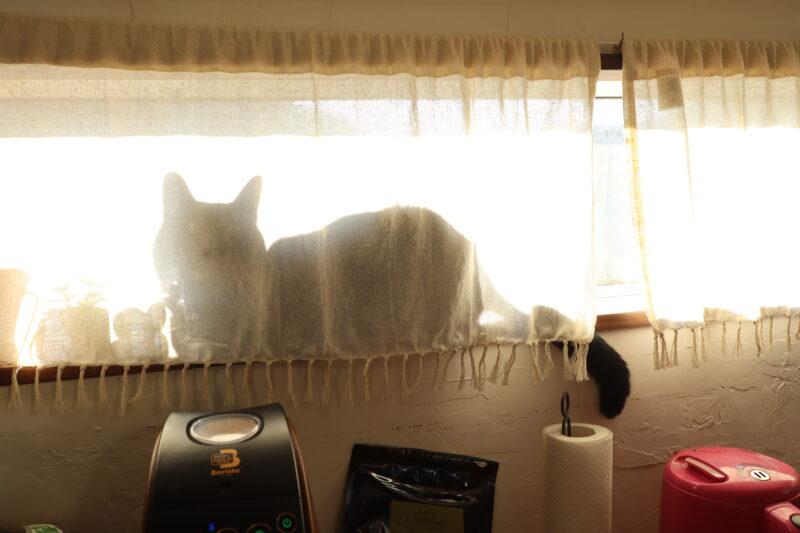 窓の猫の陰